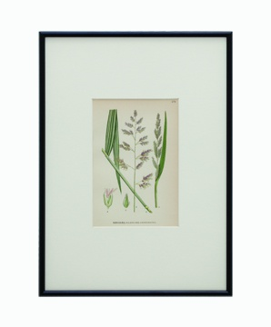 BOTANICAL GRASS_10