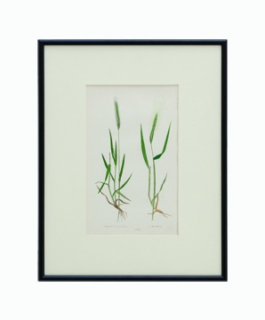 BOTANICAL GRASS_06