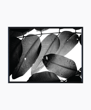 BRANCHES AND LEAVES_01