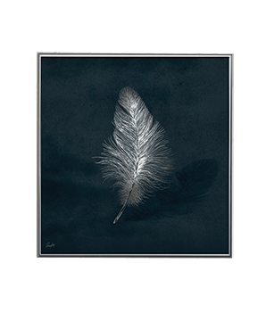 SILVER FEATHER NIGHT_SQ